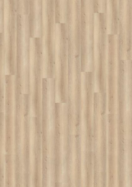 Smooth Oak Beige - 500 M / L / XXL Laminat zum Klicken 8 mm