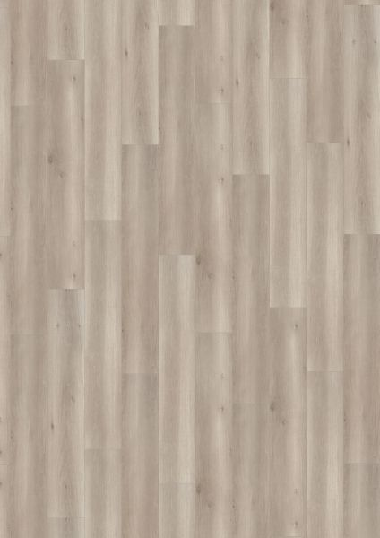 Smooth Oak Grey - 500 M / L / XXL Laminat zum Klicken 8 mm