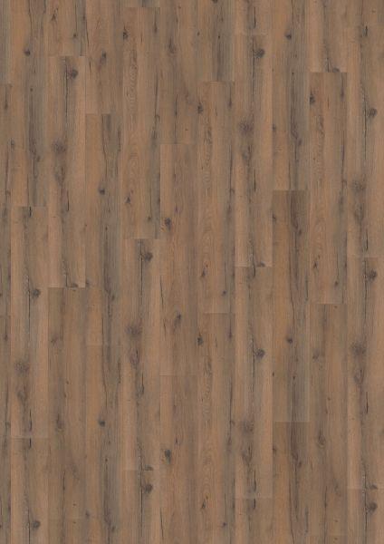Strong Oak Darkbrown - 500 M / L / XXL Laminat zum Klicken 8 mm