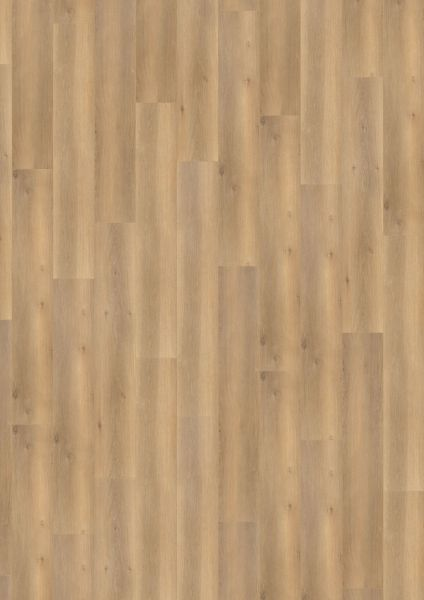 Smooth Oak Brown - 500 M / L / XXL Laminat zum Klicken 8 mm