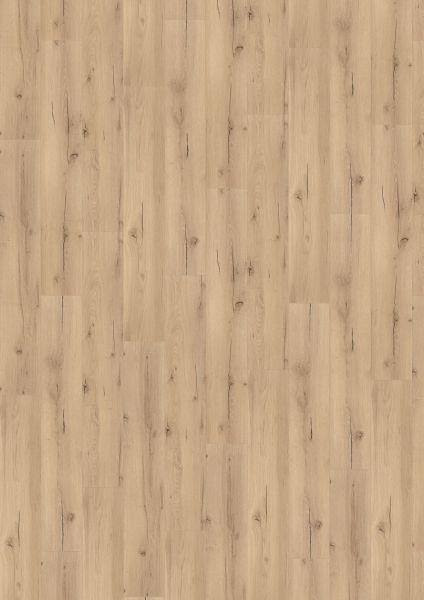 Strong Oak Beige - 500 M / L / XXL Laminat zum Klicken 8 mm