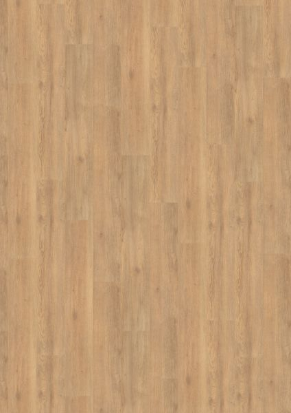 Balanced Oak Brown - 500 M / L / XXL Laminat zum Klicken 8 mm
