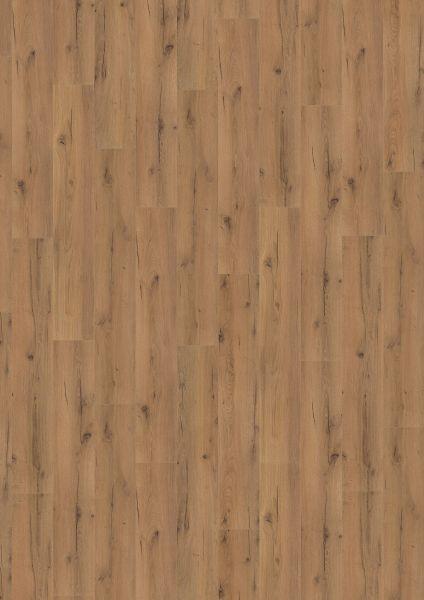 Strong Oak Brown - 500 M / L / XXL Laminat zum Klicken 8 mm
