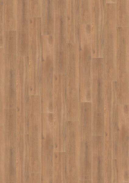 Balanced Oak Darkbrown - 500 M / L / XXL Laminat zum Klicken 8 mm