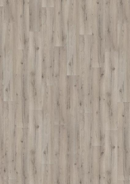 Strong Oak Grey - 500 M / L / XXL Laminat zum Klicken 8 mm